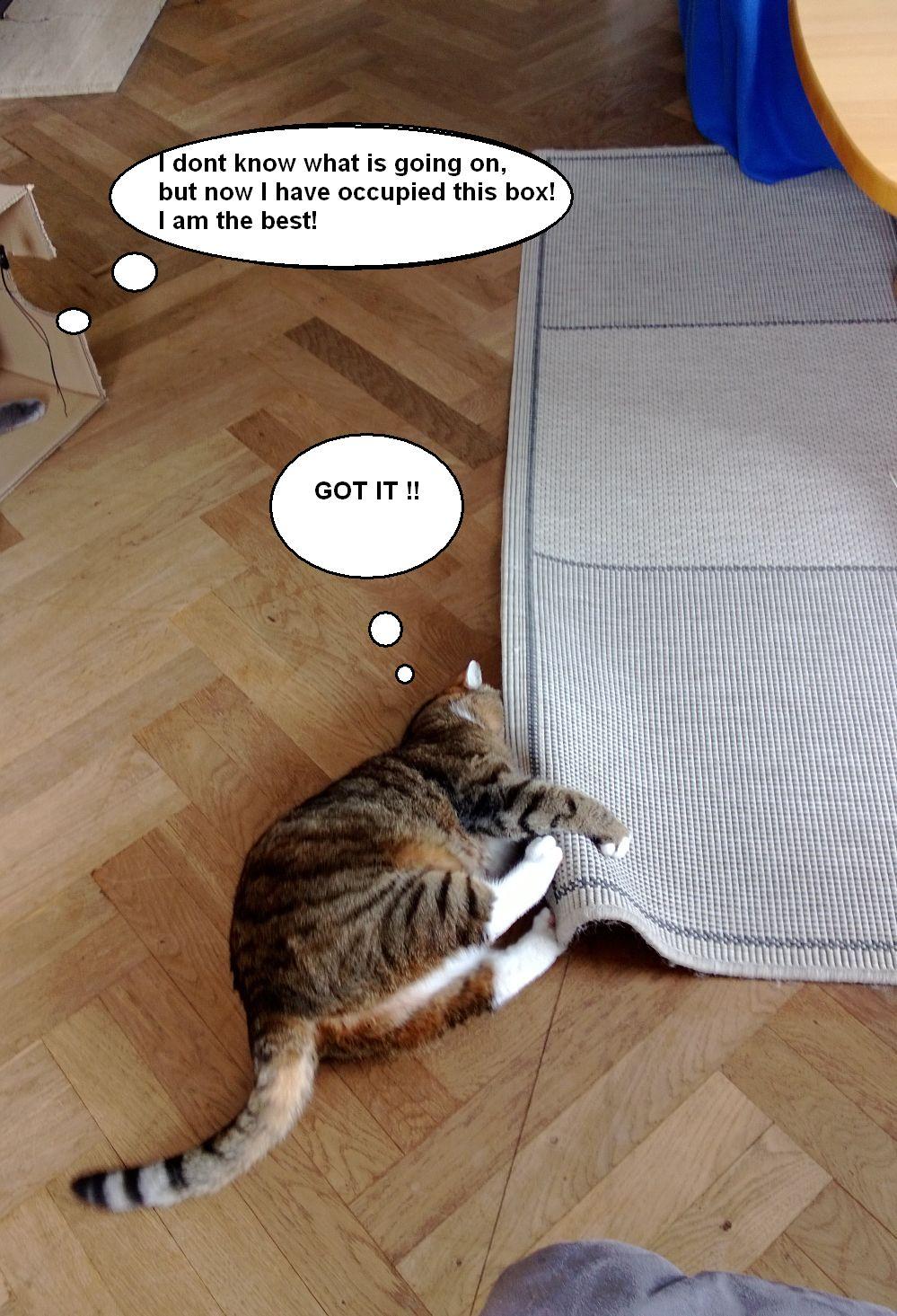 I Can Speak Cat